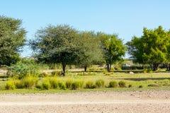 向徒步旅行队公园的路在巴尼亚斯岛先生海岛,阿布扎比,阿拉伯联合酋长国上 免版税库存图片