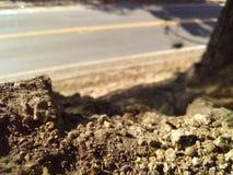 向成功的路可以是岩石的,如果您don& x27; 嗅到玫瑰的t中止 库存照片