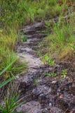 向方式扔石头 在Chapada dos Veadeiros的Encontro das阿瓜 图库摄影