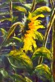 向日葵丙烯酸酯,向日葵原始的手画艺术开花的油画,在太阳的美丽的金向日葵在帆布开花 库存照片