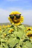 向日葵中间穿戴的玻璃 阳光在泰国 免版税库存照片