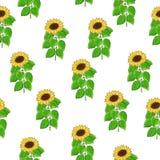 向日葵传染媒介的无缝的样式 库存照片