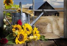 向日葵和喷壶谷仓视图 免版税库存图片