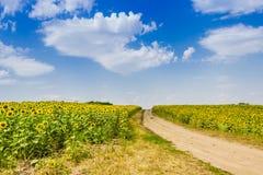 向日葵和土路的领域反对天空 图库摄影