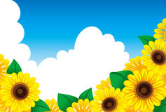 向日葵和夏天天空 免版税库存图片