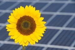 向日葵和电力太阳电池板驻防作为可再造能源的标志 库存图片