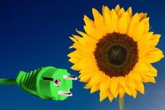 向日葵和电源插头 库存图片