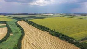 向日葵和麦子的领域从概略的看法 股票视频