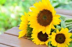 向日葵在庭院里 图库摄影