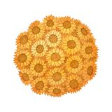 向日葵在白色背景隔绝的球水彩 库存照片
