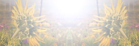 向日葵夏天或秋天背景横幅 库存照片