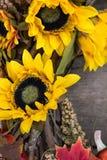 向日葵安排 库存图片