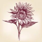 向日葵手拉的传染媒介llustration 图库摄影