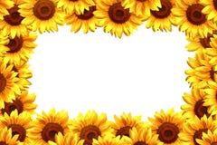 向日葵框架 库存图片
