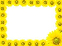 向日葵框架 免版税图库摄影