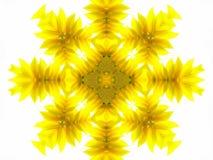 向日葵的抽象样式 库存照片