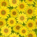向日葵花无缝的背景 向量例证