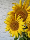向日葵花束在一个花瓶的在厨房里 库存照片