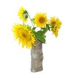 向日葵花束在一个花瓶的在轻的背景 库存图片