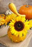 向日葵花束在南瓜的 库存图片
