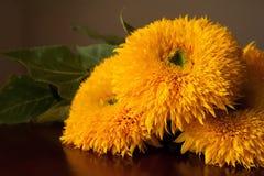 向日葵花束 库存图片