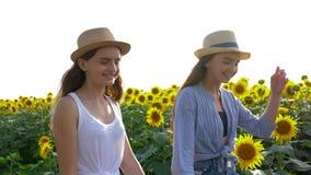 向日葵调遣,草帽的愉快的女朋友一起获得乐趣并且由在新鲜空气的手走 股票视频