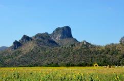 向日葵领域、Khao中国和Lopburi,泰国 免版税库存照片