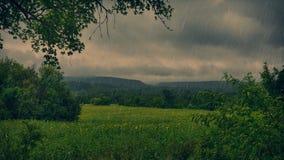 向日葵领域在雨天 库存图片