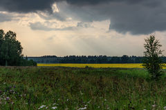 向日葵领域开花天空阴云密布 图库摄影