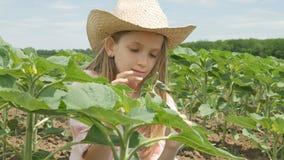 向日葵领域的农夫孩子,女孩,学习使用在耕地收获的孩子 图库摄影