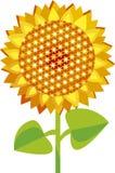 向日葵黄色 免版税库存图片