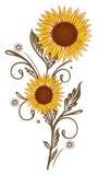 向日葵,花,花卉 免版税库存图片