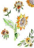 向日葵水彩 库存图片