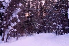 向木头的冬天路 库存图片