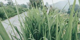 向村庄的一条小路并且,米领域的,农夫的3路-从印度尼西亚巴厘岛的图象 免版税库存图片