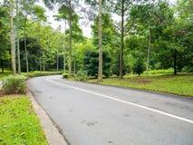 向森林小山的森林公路 库存照片