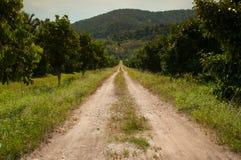 向森林的乡下公路 库存图片