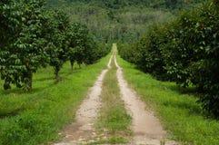 向森林的乡下公路 免版税图库摄影