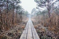 向森林的无休止的路 免版税库存图片
