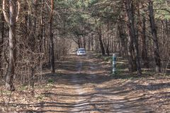 向森林的路在路的汽车由软的春天阳光照亮 森林春天自然 免版税图库摄影