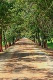 向森林的路 免版税库存照片
