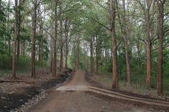 向森林的路 免版税库存图片