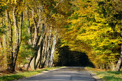 向森林隧道的路在秋天 免版税库存图片
