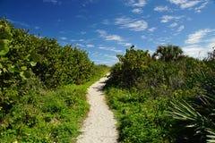 向海滩的一条含沙热带道路 库存照片