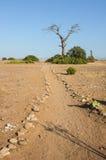 向海滩的路径,与停止的结构树 库存图片