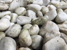 向白色扔石头 免版税库存照片