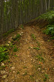 向的森林主导的山路径 免版税库存照片