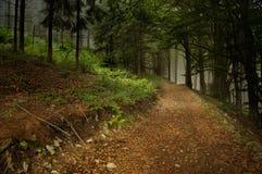 向的森林主导的山路径 库存图片