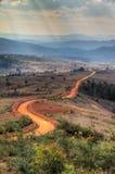 向砍伐森林的路 库存图片