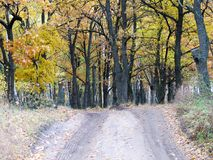 向秋天森林的路 库存照片
